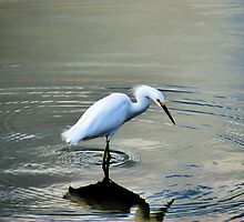 Hungry Egret by Bob Wall