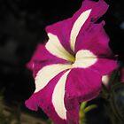 Fuchsia flower by mdagis