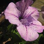 Lila flower 1 by mdagis