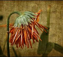 Death of a Marigold by Julesrules