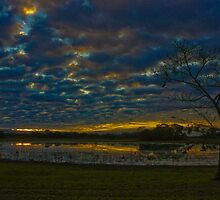 Sunset in the Pantanal by Daniel  Archer