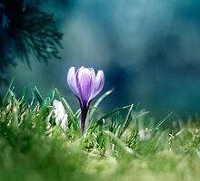 Spring is here by Matic Golob