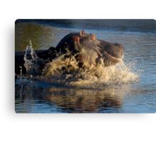 Unhappy Hippo Metal Print