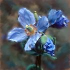 Himalayan Blue Poppy by CrowningGlory