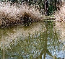 Reed bed reflection by Gary Rayner