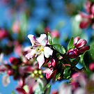 Pink blossoms and blue sky by Gregoria  Gregoriou Crowe