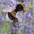 The Bees Knees by Sue Payne