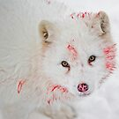 Arctic fox  by Daniel  Parent