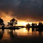 Hilo Gold by ronholiday