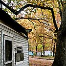 autumn shed by ashley hutchinson