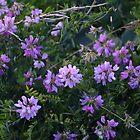 Purple Flowers by ViktoriaLeigh
