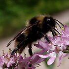 Bumblebee by SophiaDeLuna