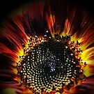 Firey Sunflower by Jonice
