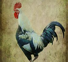 Rooster by Elaine Teague