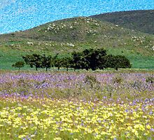 Namaqualand flowers by Regan Arendse