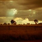 Landscape near Stockinbingal by Justin Knewstub