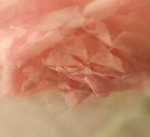 Feeling My Way (in Peach) by Lozzar Flowers & Art