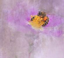 busy bee by Teresa Pople
