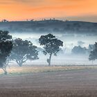 Mist between Stockinbingal and Cootamundra by Justin Knewstub