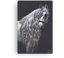 Andalusier - Andalusian Horse Canvas Print