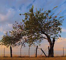 Western Sunrise - Sherman, Texas, USA by aprilann