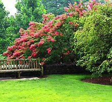 Garden Bench by Karen  Rubeiz