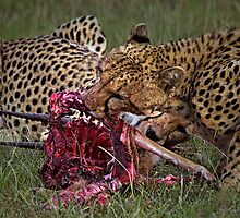 Cheetah's Meal by Henry Jager