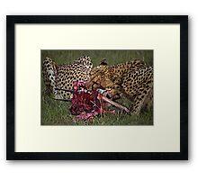 Cheetah's Meal Framed Print