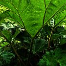 Jungle patch by moor2sea