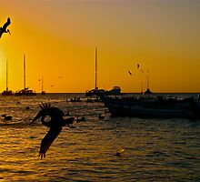 In-Flight Silhouettes in Los Roques. by DebbyTownsend
