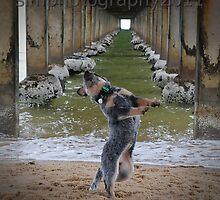 dog under the pier by simonecoleman