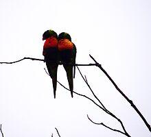 Love Birds – Noosa QLD by MiloAddict