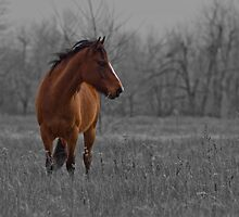 Dreaming for greener pastures by photo-Art