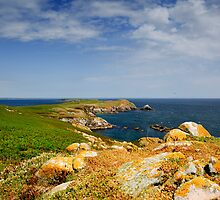 Great Saltee Island, County Wexford, Ireland by Andrew Jones