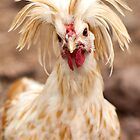 Bad Hair Day by Kgphotographics