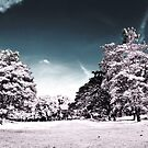 Infrarouge 2 - Panorama nature infrared mockup  by vanyahaheights