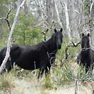 Black Brumby Mare & Foal by louisegreen