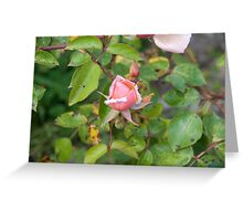Rosey Greeting Card