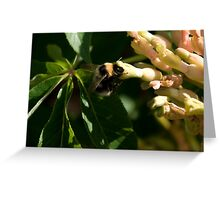 Bumble Bee 3 Greeting Card