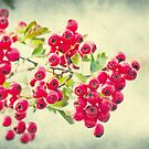 Summer berries by AD-DESIGN