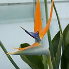 Bird of Paradise 4 by Georgia Conroy