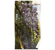 Hanging Flowers Poster