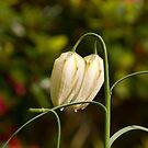 Flower 67 by Georgia Conroy