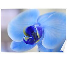 Blue Orchid, As Is Poster