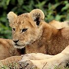Africa Continues - Cute n Cuddly by Sally Haldane