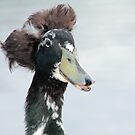 Bad hair day duck by footsiephoto