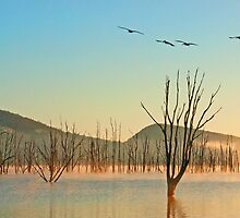 Mist on Moogerah  by Beth  Wode
