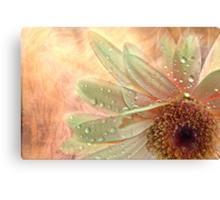 """Daisy Dreamer ..."" Canvas Print"