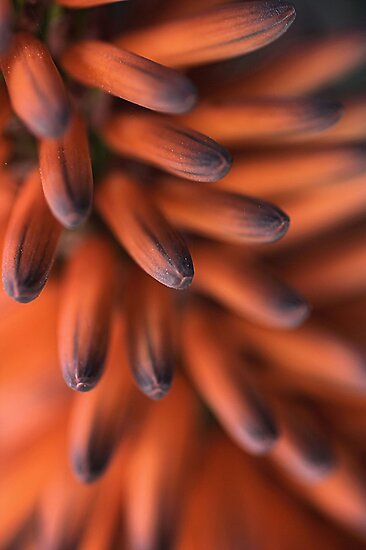 Orange Fingers by Joy Watson