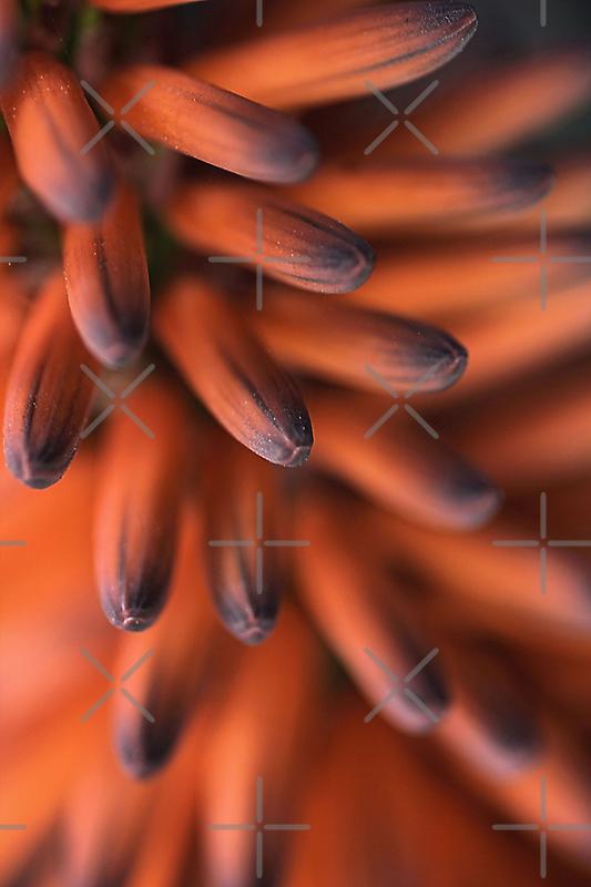 Orange Fingers by Joy Watson